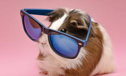 Okulary przeciwsłoneczne – co warto o nich wiedzieć?